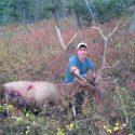 Elk down