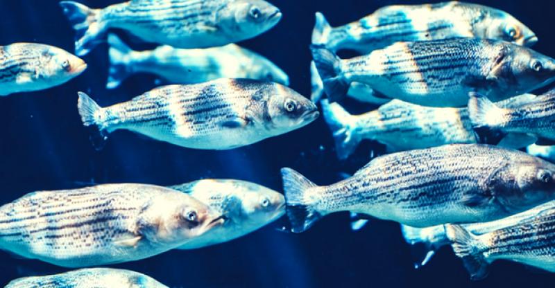 best fish finder reviews