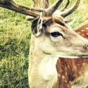 deer plot expert roundup