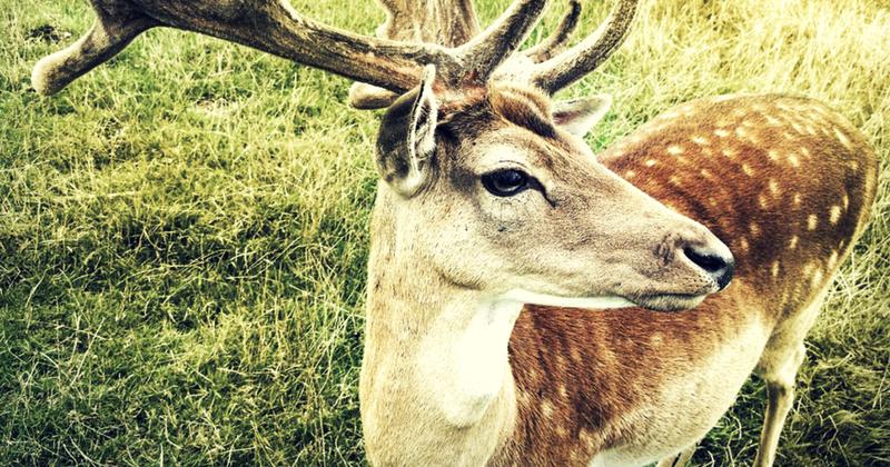 deer plot expert roundup