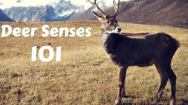 Deer Senses 101