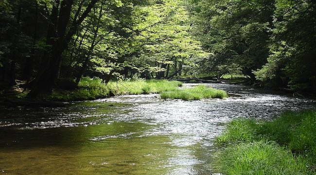 Creek in Allegheny National Forest of Pennsylvania